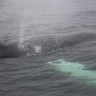 02-iceland-marina-markus-304