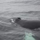 04-iceland-marina-markus-305